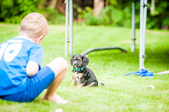20140714_sox_the_dog-5931