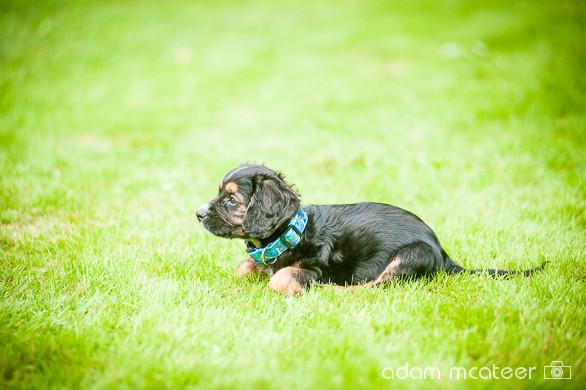 20140714_sox_the_dog-5935