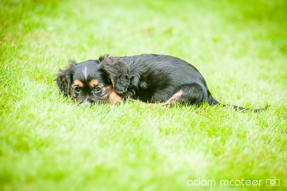 20140714_sox_the_dog-5937
