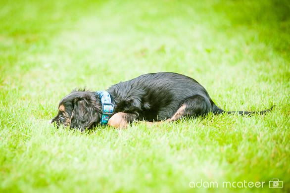 20140714_sox_the_dog-5938