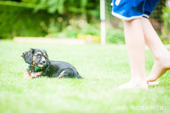 20140714_sox_the_dog-5942