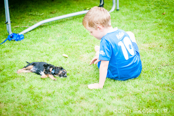 20140714_sox_the_dog-5944