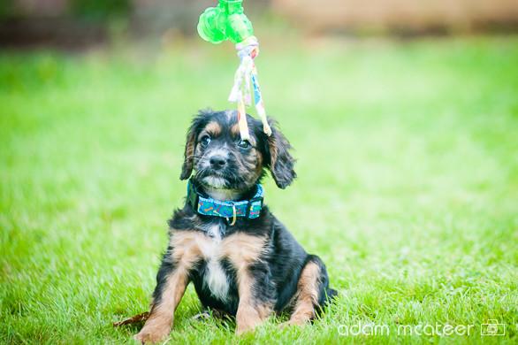 20140714_sox_the_dog-5983