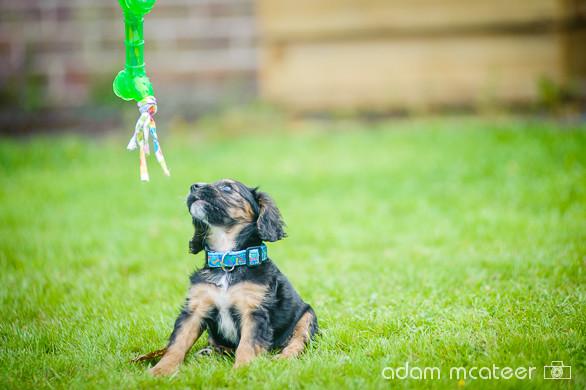 20140714_sox_the_dog-5985