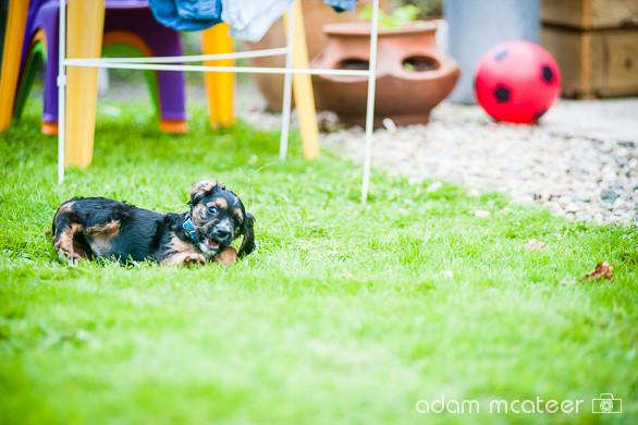 20140714_sox_the_dog-5994